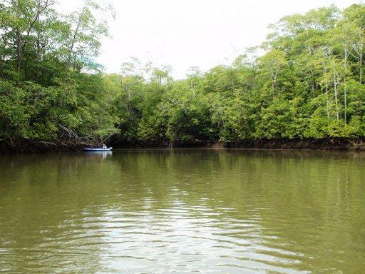 Mangrove Fishing Experience
