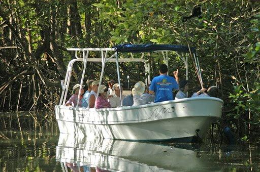 Mangrove Boat Eco Tour